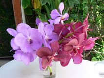De Regeling van Orchidea stock afbeeldingen