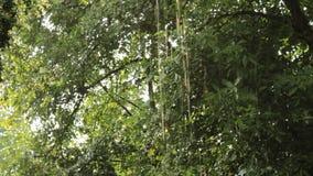 De Regen stock video
