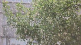 De regen laat vallen dalingen op gebouwen bij stormachtige dag stock videobeelden