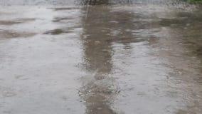 De regen valt mooie aard stock videobeelden