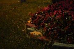 De regen van de nacht Royalty-vrije Stock Afbeeldingen