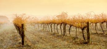 De Regen van de wijngaard Royalty-vrije Stock Foto's