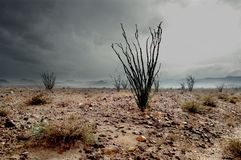 De Regen van de Winter van de woestijn Royalty-vrije Stock Foto's
