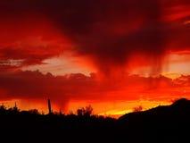 De Regen van de woestijn bij Zonsondergang Stock Afbeeldingen