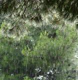 De regen van de zomer Stock Foto