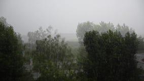 De regen van de zomer stock videobeelden