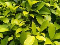 De regenachtige groene achtergrond van de bladerentextuur stock afbeelding