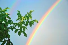 De regenboog Stock Afbeeldingen