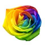 De regenboog nam of gelukkige die bloem door weg wordt geïsoleerd te knippen toe Stock Fotografie