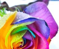 De regenboog nam toe Stock Foto's