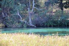 De regenboog springt het Park van de Staat Dunnellon, Florida op stock afbeelding