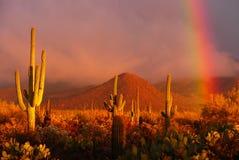 De Regenboog van de woestijn Royalty-vrije Stock Fotografie
