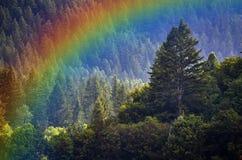 De Regenboog van pijnboomforest during rainstorm lush trees stock afbeelding