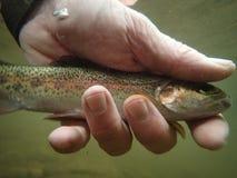 De regenboogforel met Visser ` s overhandigt onderwater stock fotografie