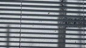 De regendruppels die neer op glas, venster stromen sloten blinden op de glasdalingen van water stock video