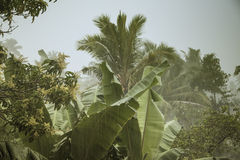 De Regens van de moesson in Sri Lanka Royalty-vrije Stock Foto