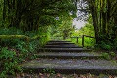 De reis in het bos Stock Afbeelding