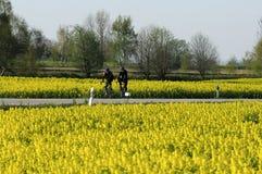De reis van de fiets in de lente Stock Afbeeldingen