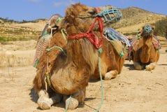 De reis van de kameel Stock Afbeeldingen