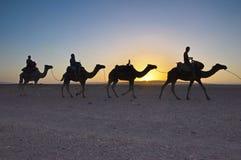 De reis van de kameeltrekking in de Marokkaanse woestijn van de Sahara Royalty-vrije Stock Fotografie