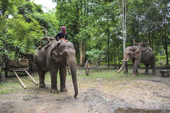 De reis van de olifantswildernis Stock Foto's