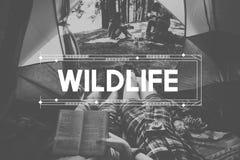 De Reis van het het wildavontuur het Kamperen Levensstijlconcept Royalty-vrije Stock Fotografie