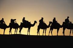 De reizen van de kameeltrekking in de woestijn - dromadaires safary Stock Foto