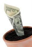 De rekening van de dollar in bloempot. Rentevoeten, de groei. Stock Foto's