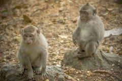 De relatie van apen Stock Fotografie