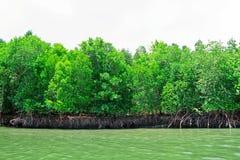 De rem van mangrove stock foto