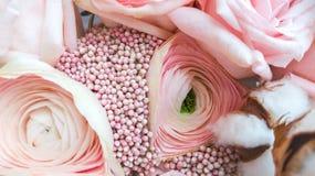 De renoncule de fleur de plan rapproché couleur rose doucement photos stock