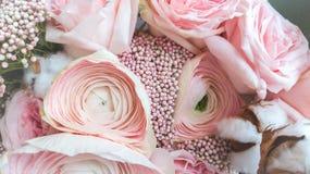 De renoncule de fleur de plan rapproch? couleur rose doucement photographie stock
