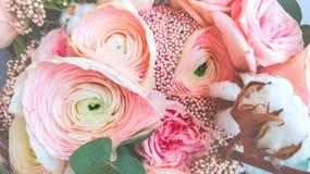 De renoncule de fleur de plan rapproch? couleur rose doucement image stock