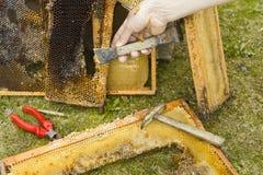 De Reparatie van bijenkaders Royalty-vrije Stock Foto