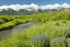 De reproductie van het bergwater met purpere lupine en bergen in Honderdjarige Vallei, dichtbij Lakeview, MT royalty-vrije stock afbeelding