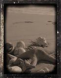 De reproductie ?voetafdrukken? van Dagguereotype royalty-vrije stock foto's