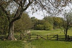 De Reserve van de Combevallei RSPB Stock Fotografie