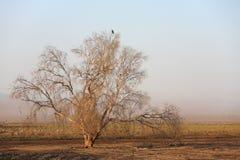 De reserve van de vogel in de Vallei Hula Stock Afbeelding