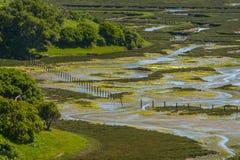 De Reserve van Elkhornslough, Monterey-Baai, Californië Stock Foto