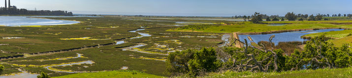 De Reserve van Elkhornslough, Monterey-Baai, Californië Royalty-vrije Stock Foto