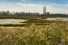 De Reserve van Elkhornslough, Monterey-Baai, Californië Stock Fotografie