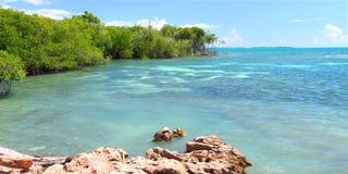 De Reserve van Guanica - Puerto Rico Stock Afbeelding