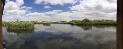 De reserve van het Azraqmoerasland royalty-vrije stock fotografie
