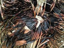 De resten van de grasboom na brand Royalty-vrije Stock Afbeelding