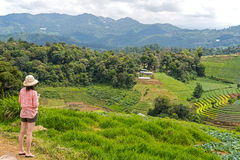 De retour de la touriste de femme à l'AMI de l'AR Chaing de montagne de confiture de lundi, Tha Photos stock