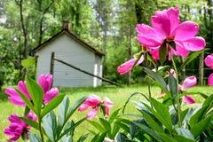 De retour des fleurs roses lumineuses de pivoine avec la Maison Blanche  photos stock