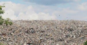De reusachtige heuvel van het afvalhuisvuil bij de stortplaats met vogels die over het recyclingsprobleem vliegen stock footage