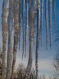 De reusachtige ijskegels van ijs hangen van het dak tegen de blauwe hemel en treetops Blauwe hemel, kalme wateren royalty-vrije stock afbeelding