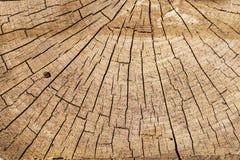 De reusachtige stomp van de besnoeiingsboom A met besnoeiingen daarin Achtergrond van gesneden boom Textuur De Reusachtige stomp  royalty-vrije stock afbeelding