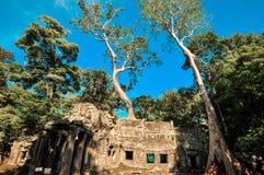 De reuzeboom die Ta Prom en de tempel van Angkor Wat, Siem behandelen oogst, Ca royalty-vrije stock afbeeldingen